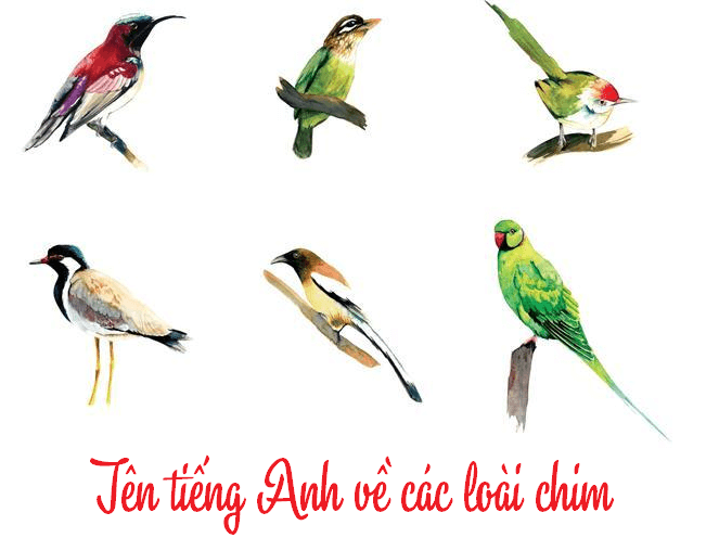 ten tieng anh ve cac loai chim
