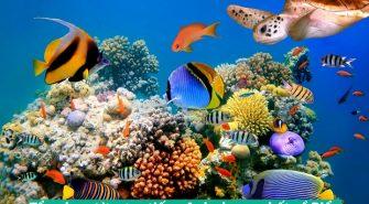 Tổng hợp từ vựng tiếng Anh chung nhất về Biển